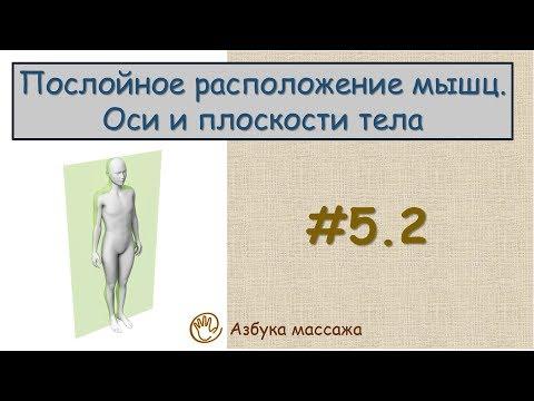 Влияние массажа на мышечную систему. Анатомия мышц, виды, строение и функции