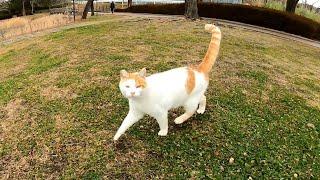 大雪も止んだようなので公園に散歩に行ったら野良猫が顔見て急いで駆け寄ってきた