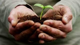 """Экологический урок для школьников """"Лесомания"""""""