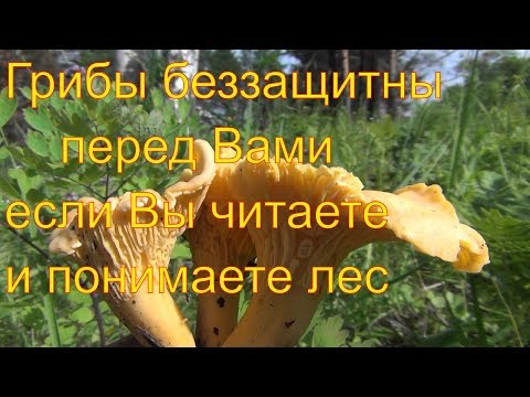 Грибы в  грибы - Воля!