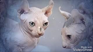 Самые дорогие кошки мира.19 видов пород. The most expensive cats in the world.