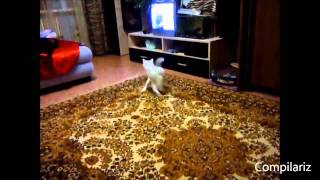 Коты танцуют Танцующие котики
