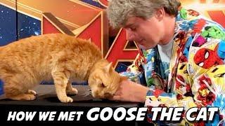 Meet Goose The Cat, Scene Stealer of Captain Marvel