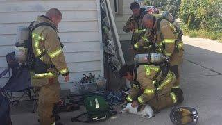 胸が熱くなる!!火災現場から救出されたネコ。消防士たちの救命活動によ...