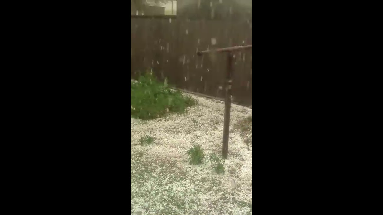 Our Poor Garden: Hail Storm Part One
