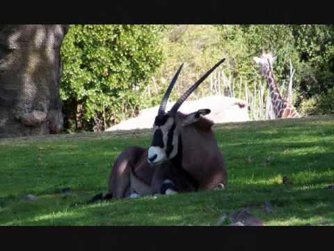 Seattle Woodland Park Zoo & Seattle Aquarium