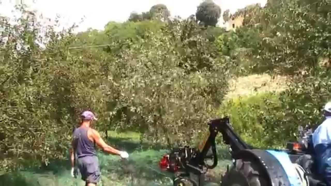 Olivraptor By Bosco Applicazione A Trattore Per Raccolta Olive Noci Ciliegie Mandorle Youtube