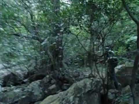 Trekking in Tamil Nadu Andhra Forest!!