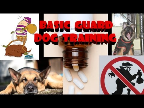 BASIC DOG GUARD TRAINING IN HINDI / URDU 2017 ||CHORI SE KAISE BACHE||SMART DOGS TRAINING||