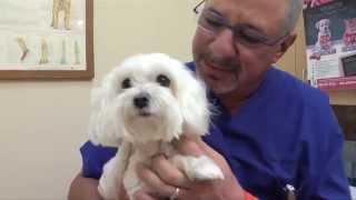 Take Paws: Healing Therapies with David Scott Bieber, DVM, P.A.