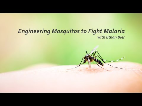 VIDEO: Engineering Mosquitos to Fight Malaria with Ethan Bier