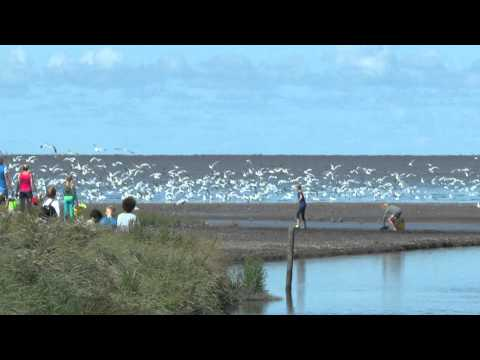 Experience the Wadden Sea World Heritage, a wonderfully area.
