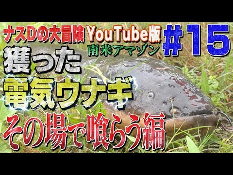 #15DYouTube /Crazy Director 's  Gigantic Electrical eel Caught