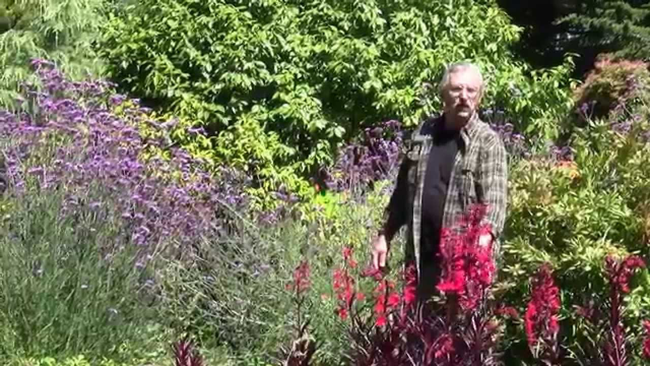 Mendocino Coast Botanical Gardens In Fort Bragg, CA   Perennials With Mario  Abreu