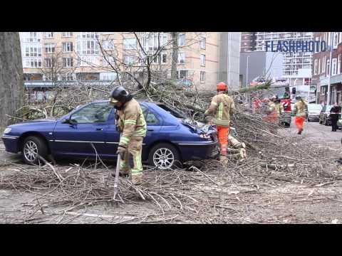 Grote boom valt op geparkeerde auto's - Wevershoekstraat Rotterdam