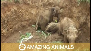 Four Baby Elephants Rescued From Well