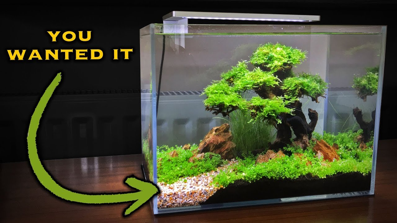 A Path To The Bonsai Tree Aquascape - YouTube