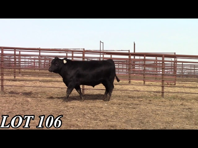 Mead Angus Farms Lot 106