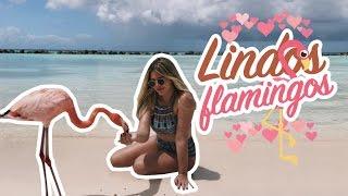 Praia dos Flamingos  #aruba4 thumbnail