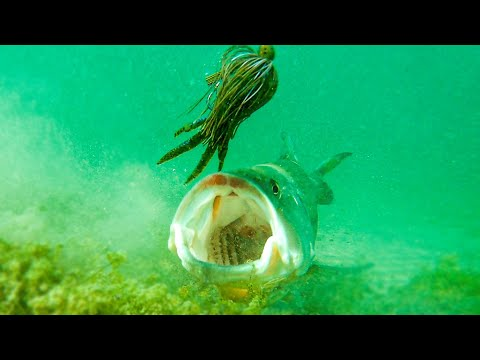 **Insane Underwater Footage** Fish Attacking Lures And Bass Fishing Tips!