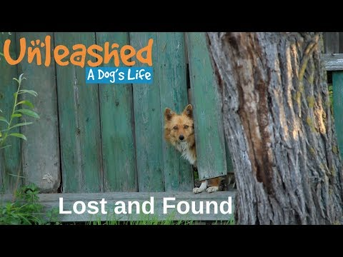 Lost and Found: How to Find Your Lost Pet