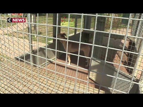 Le Refuge De La SPA De Plaisir, Débordé Par L'afflux D'animaux Abandonnés