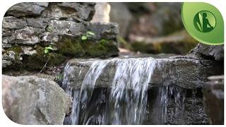 Sons da Natureza: Música para Relaxamento Profundo com Água Corrente e Pássaros