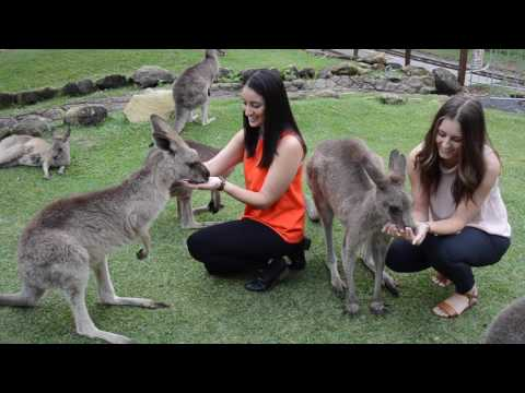 A day at Currumbin Wildlife Sanctuary, Gold Coast | Experience Oz