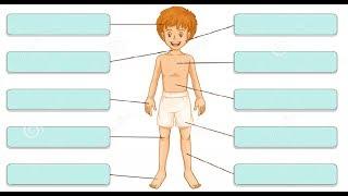 Части тела Körperteile/немецкий для начинающих