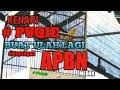 Kenari Puqie Jeda Hanya  Detik Habis Tu Gacor Dor Dor Durasi Full  Mp3 - Mp4 Download