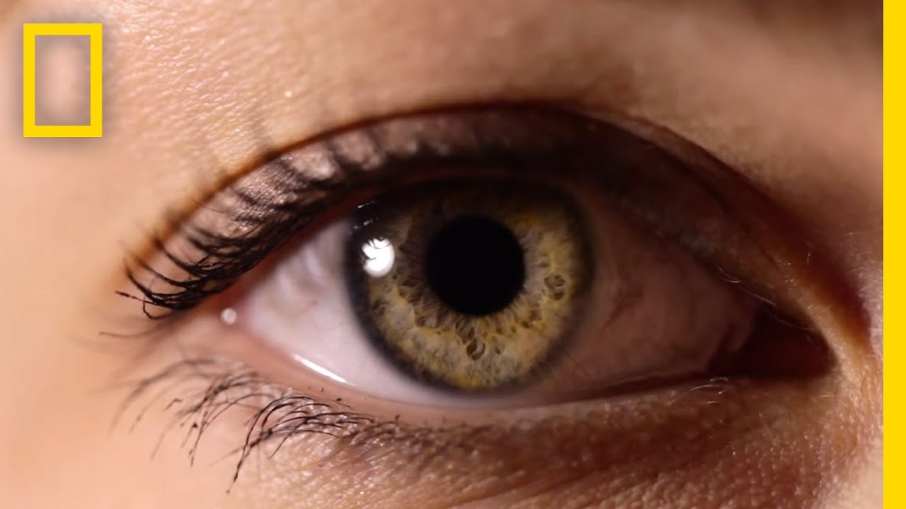 eyes  the windows to your health