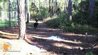 Off-leash Freedom With Sallie The Jack Russell Terrier - Naples Florida Dog Training