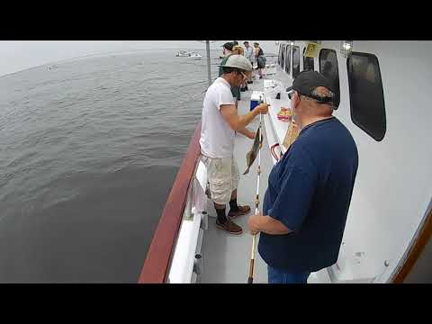 JUNE FLUKE FISHING CAPTREE,NY