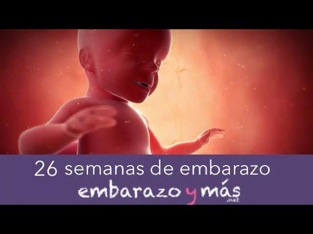26 Semanas De Embarazo Sexto Mes Embarazoymas Youtube