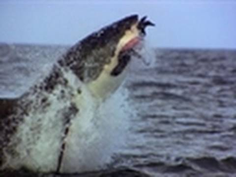 Ultimate Air Jaws - Normal Prey | Shark Week 2010