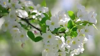 Потрясающе Красивая Музыка - Мелодия Весны!