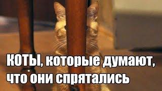 Коты, которые думают, что отлично спрятались