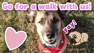 Go for a walk with us! | Wir nehmen euch mit zum Gassi