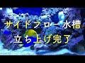 マリンアクアリウム【水槽立ち上げ】byナンヨウハギ