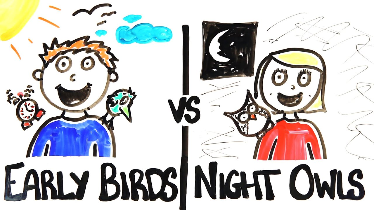 early birds vs night owls youtube