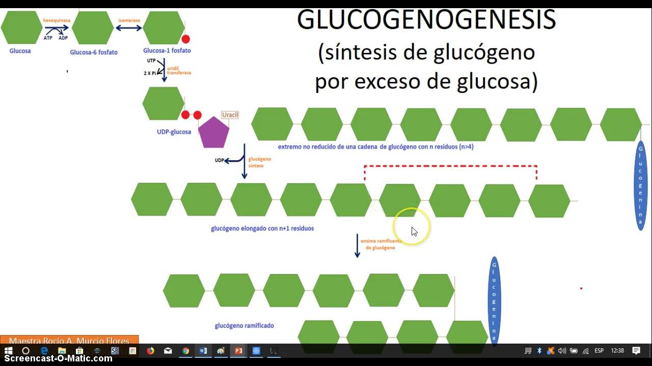 Metabolismo del Glucógeno 2a Parte - YouTube