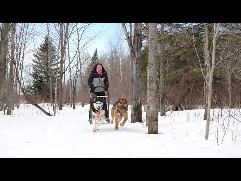 Download Trottinette des neiges / Traîneau à chiens | NAHAK