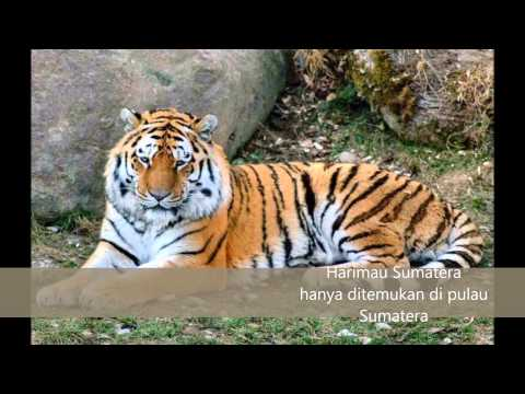 WONDERFUL OF INDONESIA ( FAUNA ASIATIS )