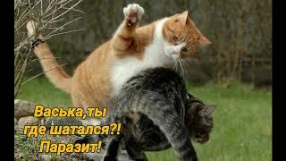 Юмор.Приколы.Веселые картинки про животных для настроения.Позитив.