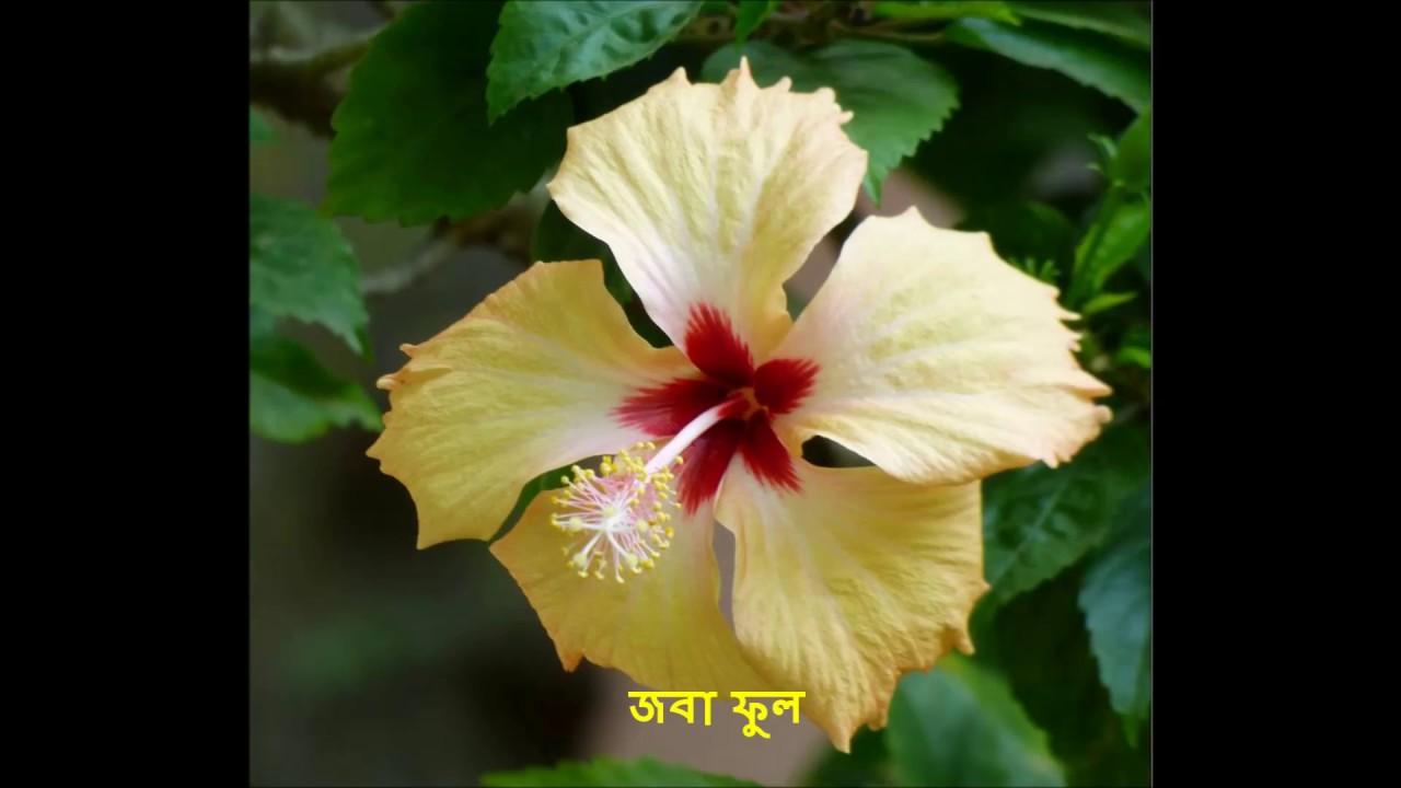 Hawaiian flowers name red anthurium flower hawaiian passion fruit indian flower with bengali namepart izmirmasajfo Choice Image