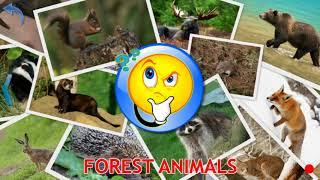 Шок! Так легко учить английский язык!Лесные животные атакуют !Forest animals for kids!