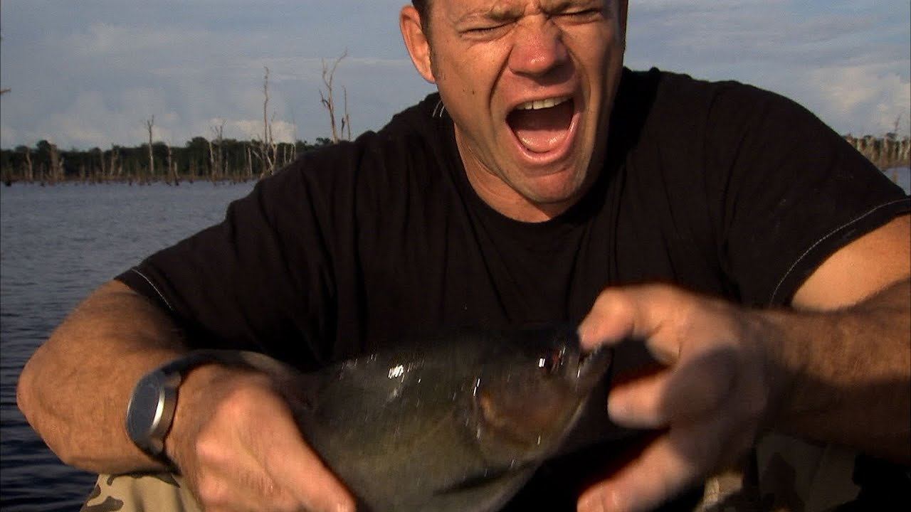 Piranha fish eating man images for Where are the fish biting