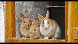Каких животных не принято держать у крымских татар