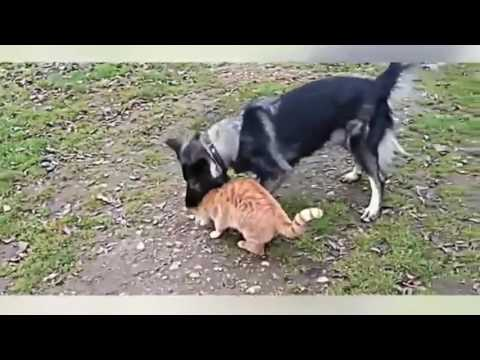 Funny Dog vs Cat Compilation Video