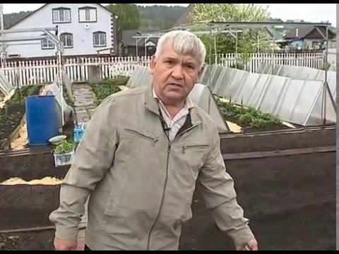 Росконцентрат удобрение купить в россии .Совет от опытного .